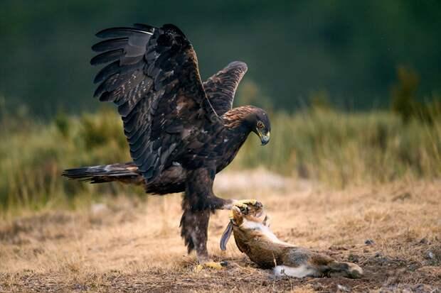 Фото хищников и охоты