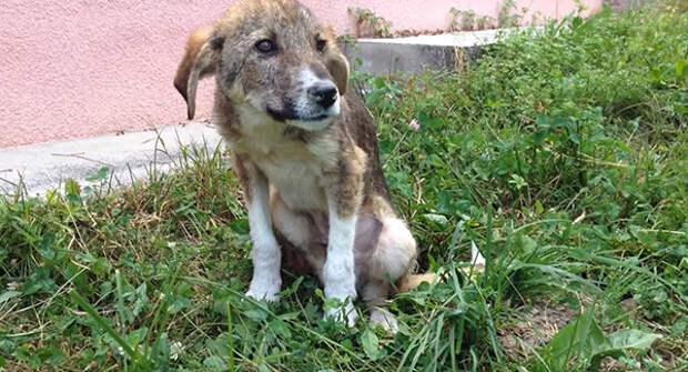 Как у бездомного щеночка получилось найти хозяев в совершенно другой стране