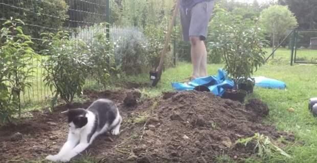 """Смотрите, как этот кот """"помогает"""" своему хозяину в саду"""