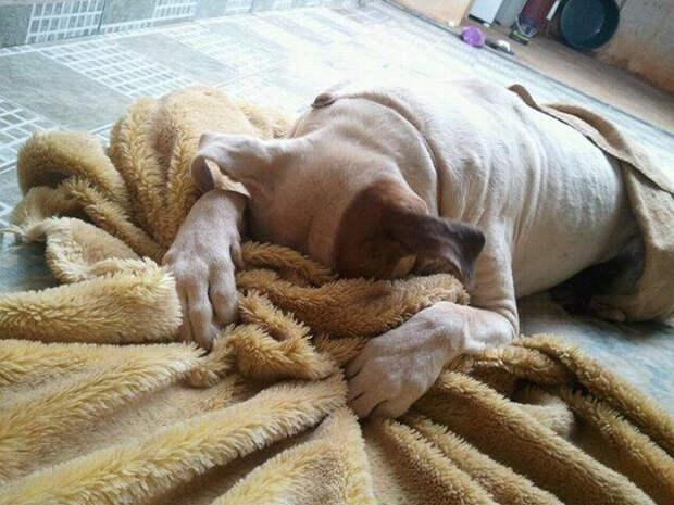 Душевные фото собак, которые ждут приёма у ветеринара
