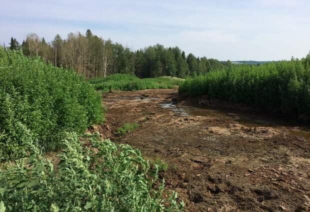 Залившего лес навозом предпринимателя из Удмуртии обязали возместить ущерб природе