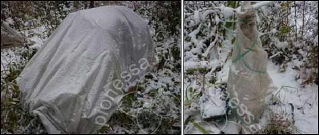варианты зимних каркасных укрытий растений с использованием агроспана