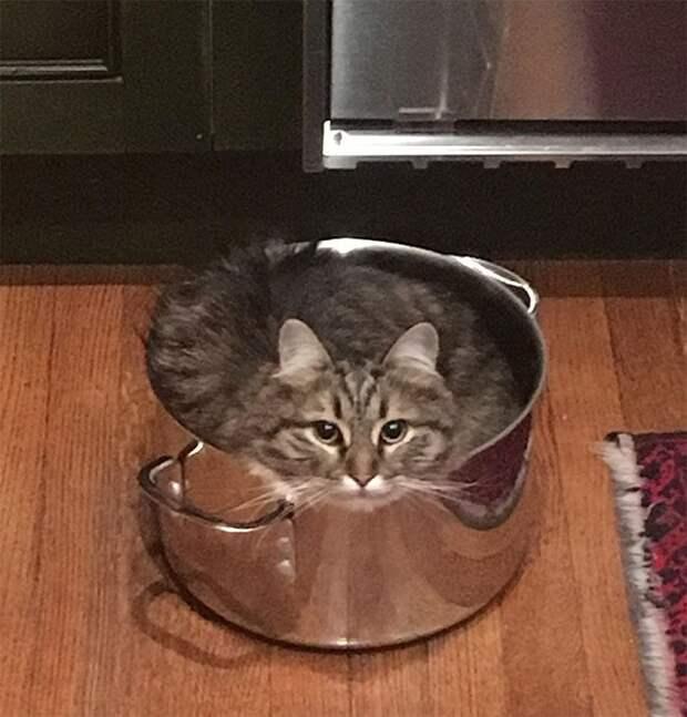 14+ снимков, которые докажут, что коты — это жидкость