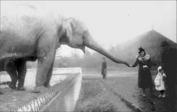 Варшавский зоопарк в 1938 году.