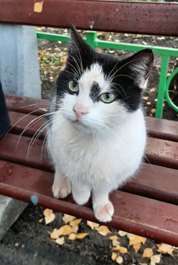 Долго такой бесхитростный домашний котик на улице не выживет...