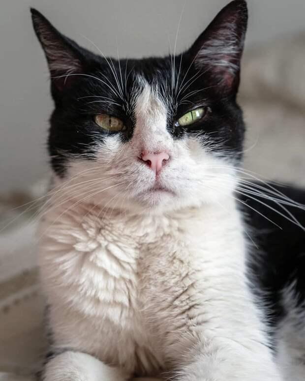Всё написано на морде кот, коты, опасный кот, прикол, суровый