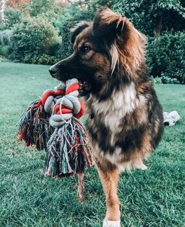 Пес и веревка