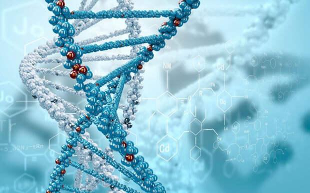 ДНК,развитие,человек,Гипотезы