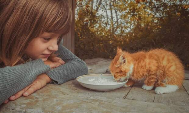 17 фактов, которые заставят вас поверить в доброту добро, интересное, факты, фотографии