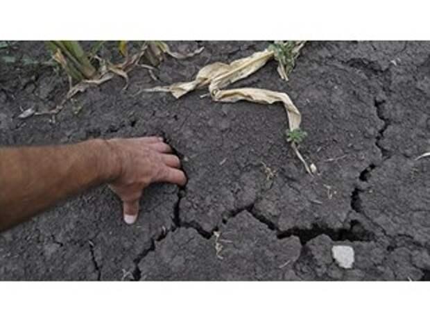 Засуха против Украины: неурожай убивает «аграрную сверхдержаву»
