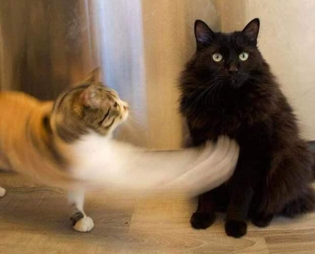 Чистая правда о том, что будет, если завести вторую кошку к первой
