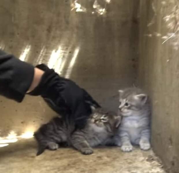 Спустившись в канализацию, волонтеры увидели жмущихся друг к другу диких котят