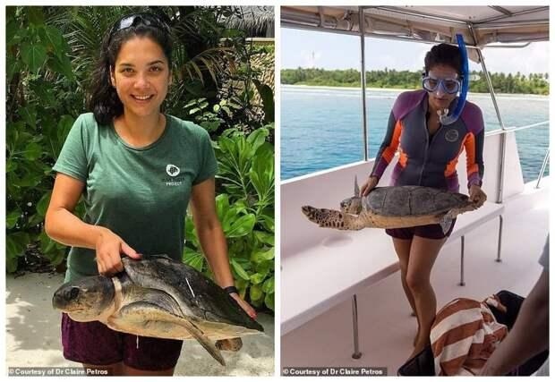 """Знакомьтесь, это черепаховая """"мама"""" - врач-ветеринар Клэр Петрос. Приехала из Лондона на Мальдивы и работает в центре спасения и реабилитации черепах Мальдивы, ветеринар, реабилитация, сети, спасение животных, спасение черепахи, черепаха, черепахи"""