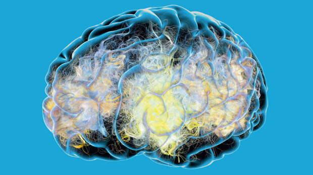 """О значении """"фонового шума"""" мозга для организма узнали ученые"""