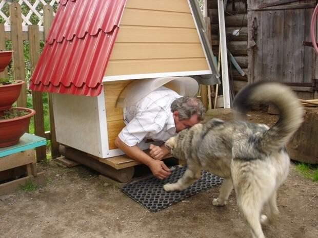 Проверил будочку сначала сам животные, картинки, прикол, собаки, собачники, фото, юмор