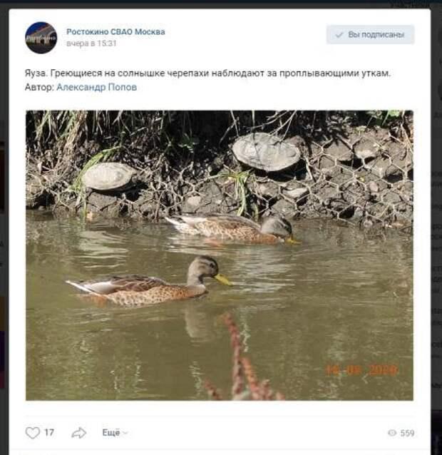 Фото дня: черепахи на берегу Яузы