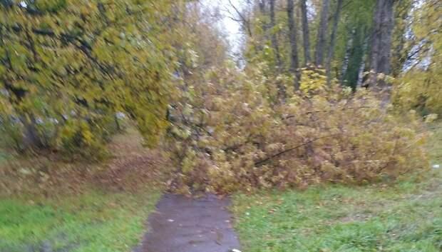 Во Львовском убрали упавшее дерево, которое заблокировало проход к остановке