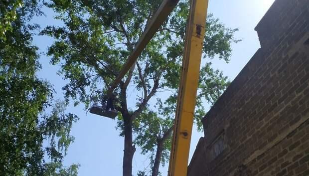 Санитарная обрезка деревьев началась в микрорайоне Ново‑Сырово Подольска