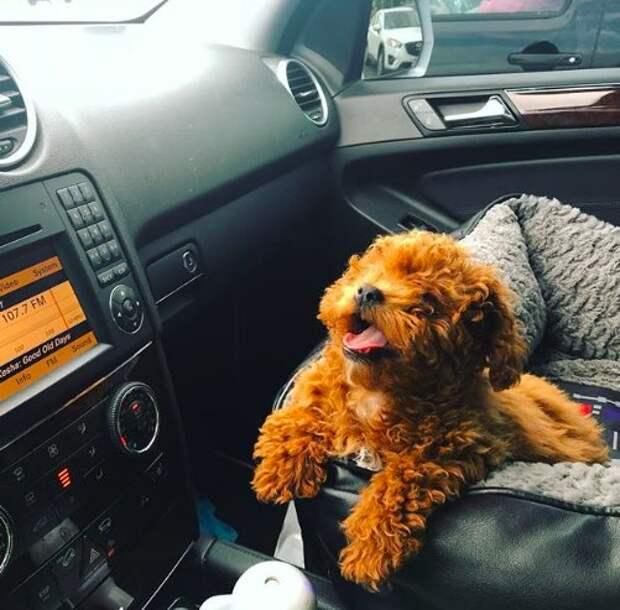 «Собака-крот тоже хочет жить!» Ради щенка, спасённого от жестокой процедуры, все в доме носят колокольчики!