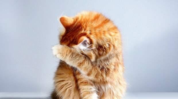 Почему кошку лучше не называть человеческим именем