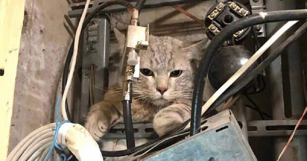 Жильцы дома на Севастопольском остались без интернета из-за упрямого кота в щитке