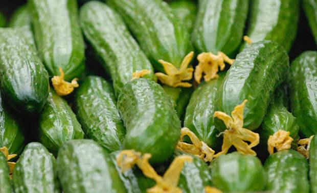 Лучше покупать огурцы прямые или изогнутые? Овощеводы напоминают: старайтесь не покупать следующие виды, ведь на 80% в них колют гормоны (Sina, Китай)
