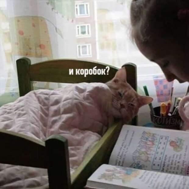 Сказка для котика