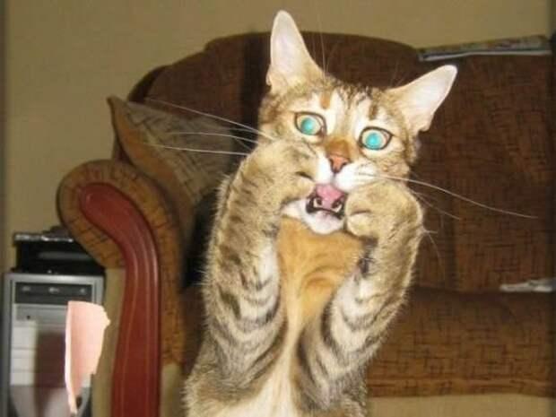 Кто-то явно испугал кота aртистизм, актер, животные, мир, подборка, фото, эмоция, юмор