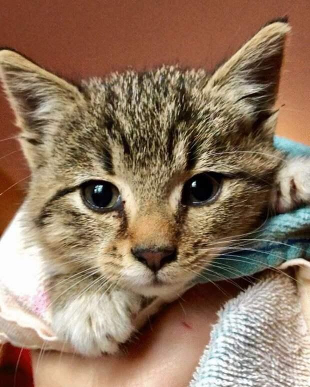 Маленький котенок сидел на парковке под дождем и плакал, моля прохожих о помощи