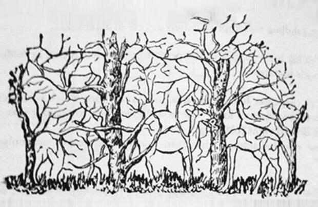 силуэты животных, спрятанные в ветвях деревьев