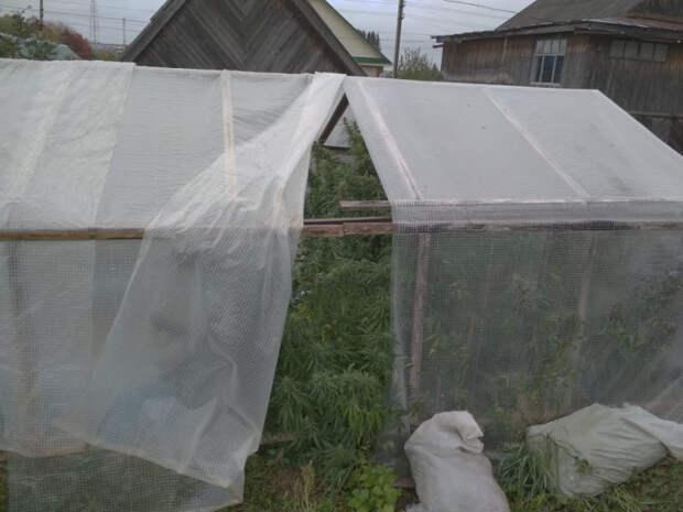 В тепличных условиях: 3,5 кг марихуаны и конопли нашли у жителя Удмуртии
