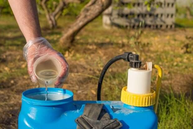 Приготовление раствора пестицидов