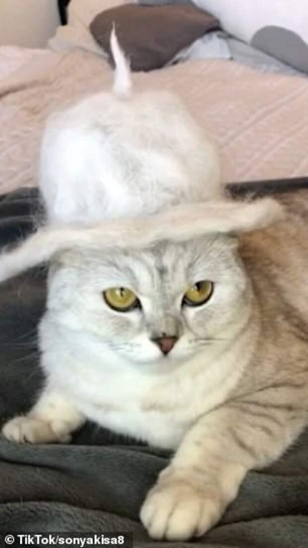Московская кошка Соня насмешила 48 млн человек