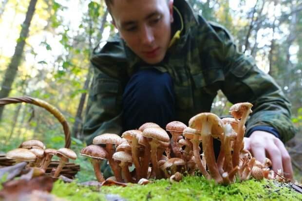 В Минприроды рассказали о сборе грибов и валежника лесу