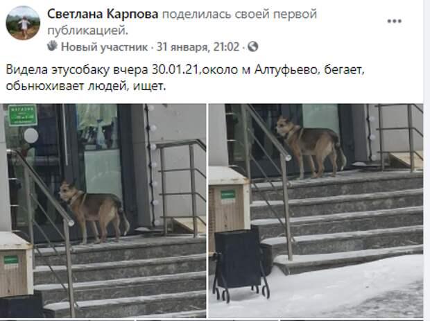 У  найденной возле метро «Алтуфьево» собаки нашлись хозяева