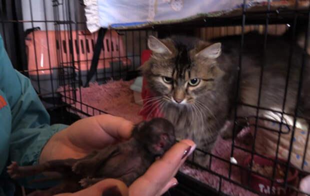 Спасение кота обернулось для уральской школьницы угрозами