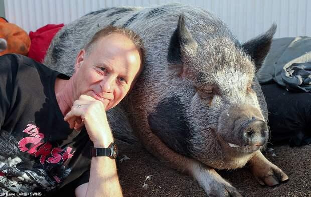 свинья с хозяином