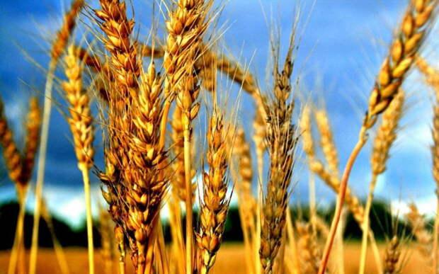 Поляки нашли виновного в возрождении сельского хозяйства РФ