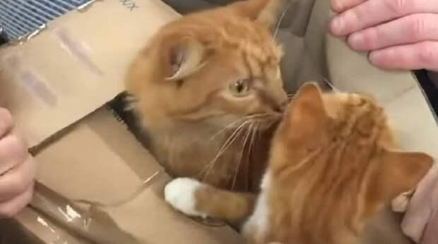 Увидев коробки, волонтёры бросились их распаковывать. А через миг оттуда показались испуганные кошачьи мордочки