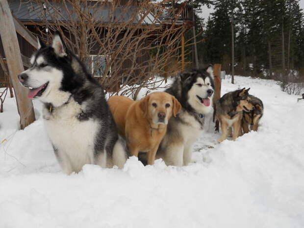 Любители снега домашние любимцы, домашний зоопарк, животные, забавно, отзывы владельцев, поучительно, сколько животных держать, четвероногие питомцы