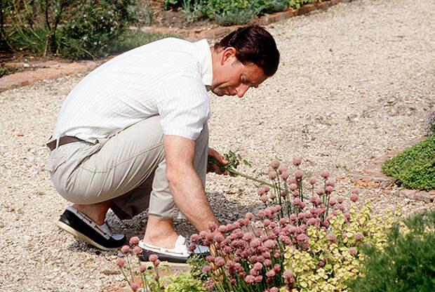 Принц Чарльз любит заниматься садоводством
