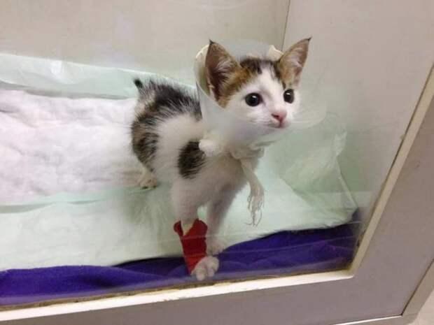 Котенок, спасенный из мусорного бака, оказался уникумом!