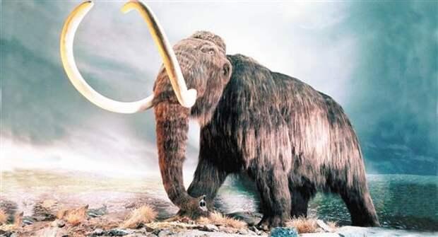 Сто лет назад под Тольятти раскопали кладбище мамонтов