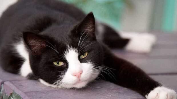 «Трое на одного»: как отважный кот распугал хищников, которые были крупнее него