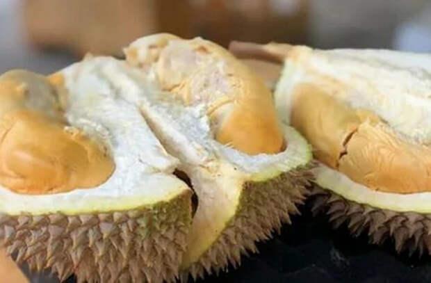 В Сингапуре научились превращать шелуху дуриана в антибактериальные повязки
