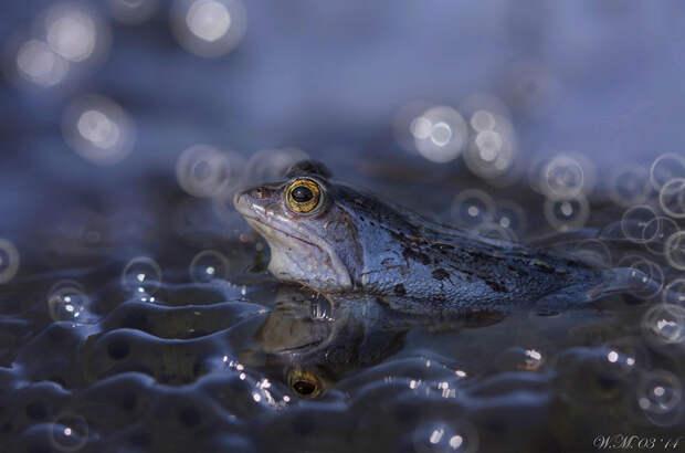ФОТОВЫСТАВКА. Wil Mijer: тропические лягушки