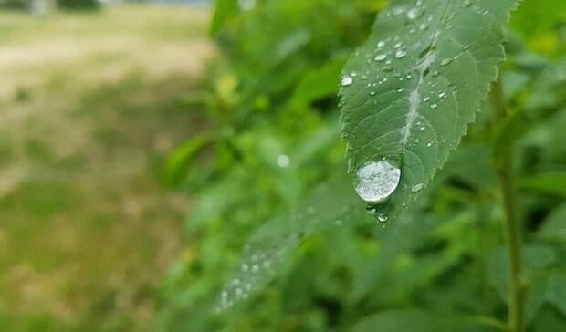 Освежающие дожди сгрозами придут наСтаврополье ввыходные