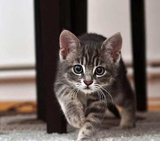 Вот пришел ты домой, а там сюрприз -- твоя собака завела себе котёнка...