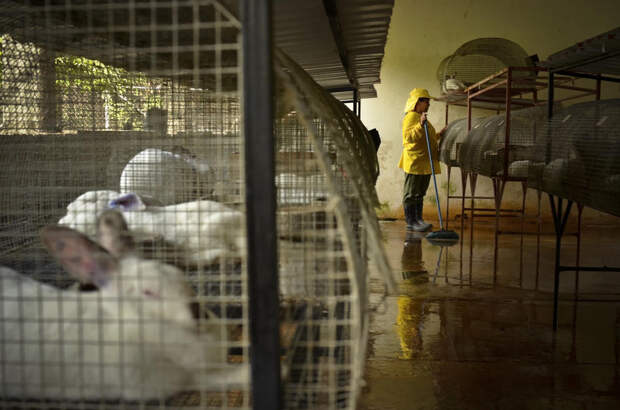 prison12 Латиноамериканские тюрьмы: мужская и женская