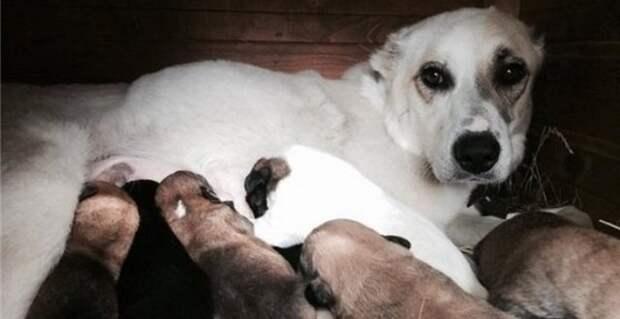 Кто-то бросил собаку в озеро, еще и привязал восьмерых щенят в качестве груза…
